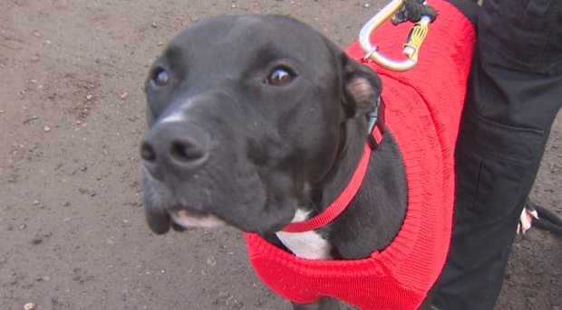 FRANKIE THE THERAPY DOG----IS COMING HOME FOR CHRISTMAS
