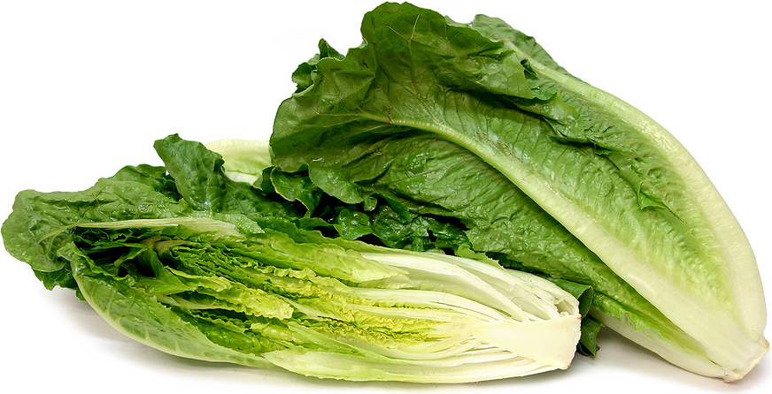 ROMAINE LETTUCE LINKED TO E COLI OUTBREAK IN THREE PROVINCES