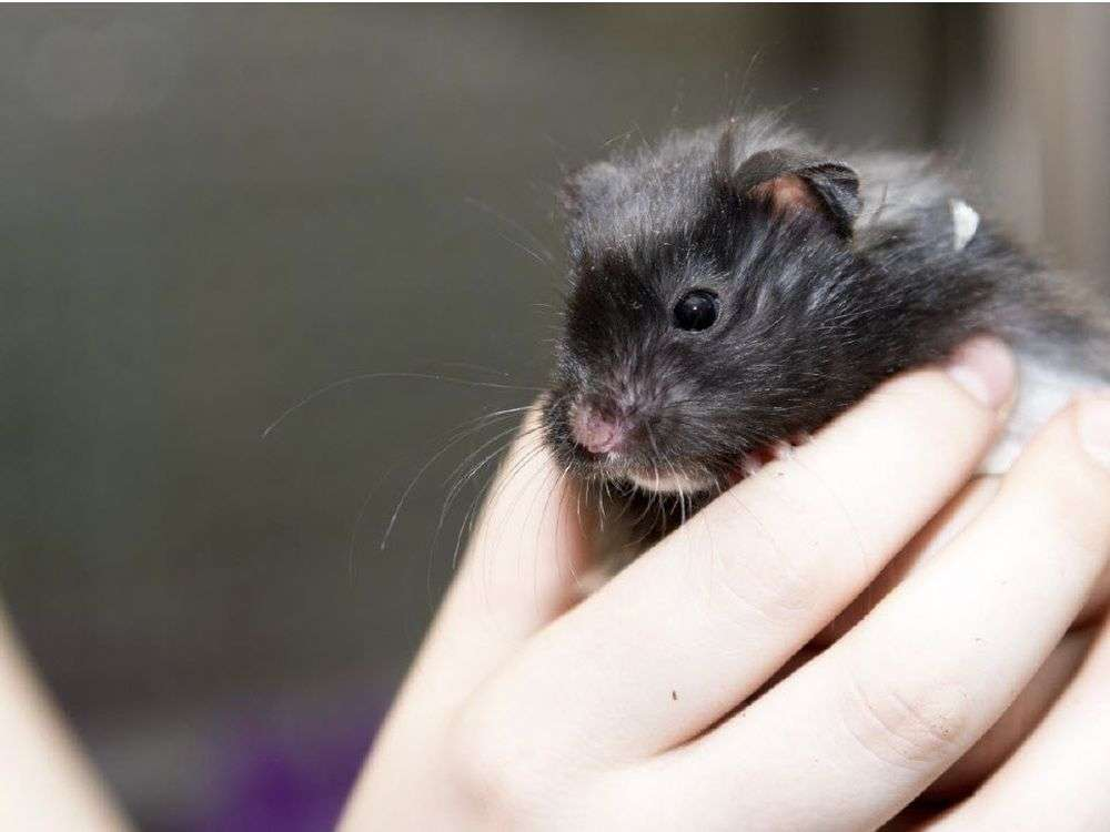 HUNDREDS OF ANIMALS--INCLUDING THOSE SEIZED FROM WEM PET STORE--UP FOR ADOPTION