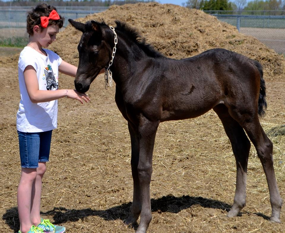 """RCMP NEED THE KIDS TO """"NAME THOSE FOALS"""""""