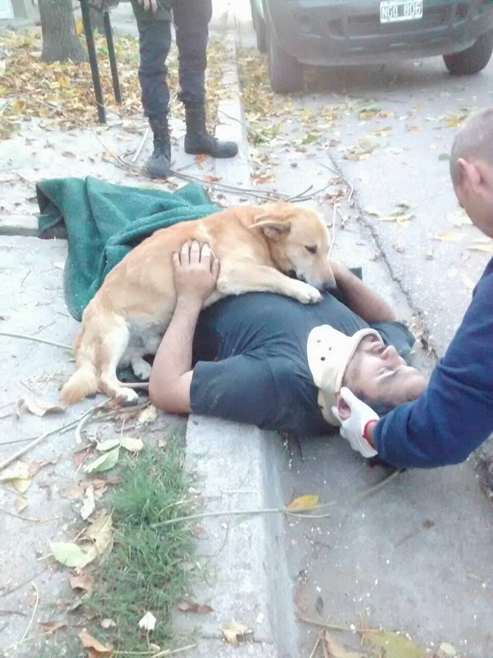 JJ's GOOD NEWS: Dog Refuses To Stop Hugging His Owner Who Was Injured In A Fall