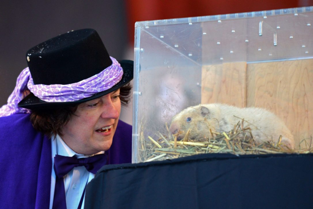 Wiarton Willie Laid To Rest, What Now?