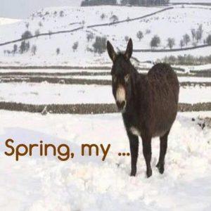 spring-donkey