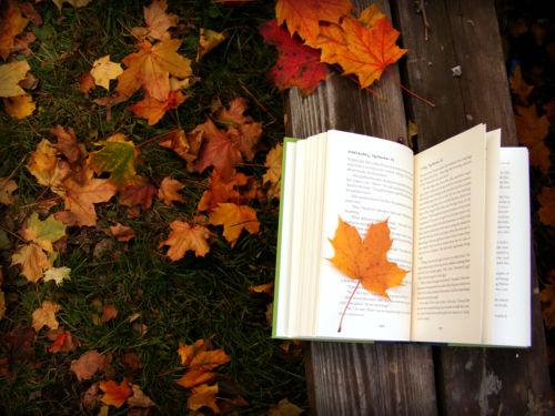 Fall Reading Fun