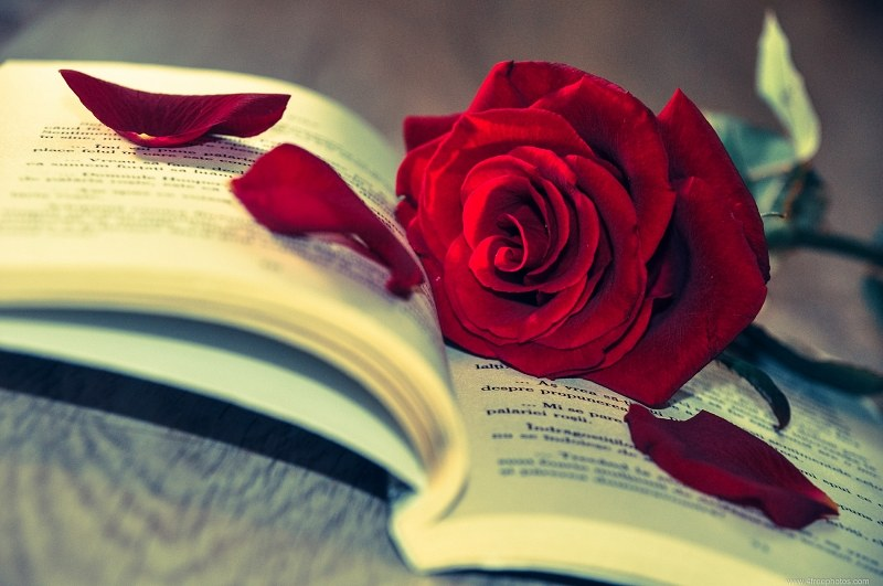 5 Books To Up Your Romance This Valentine's Day!