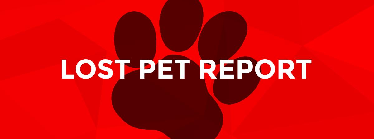 Pet Report