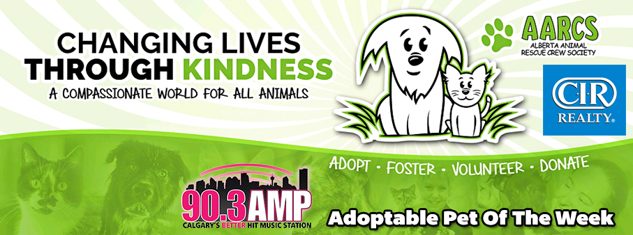 Feature: http://ampcalgary.com//aarcs-animal-of-the-week-with-cir-realty